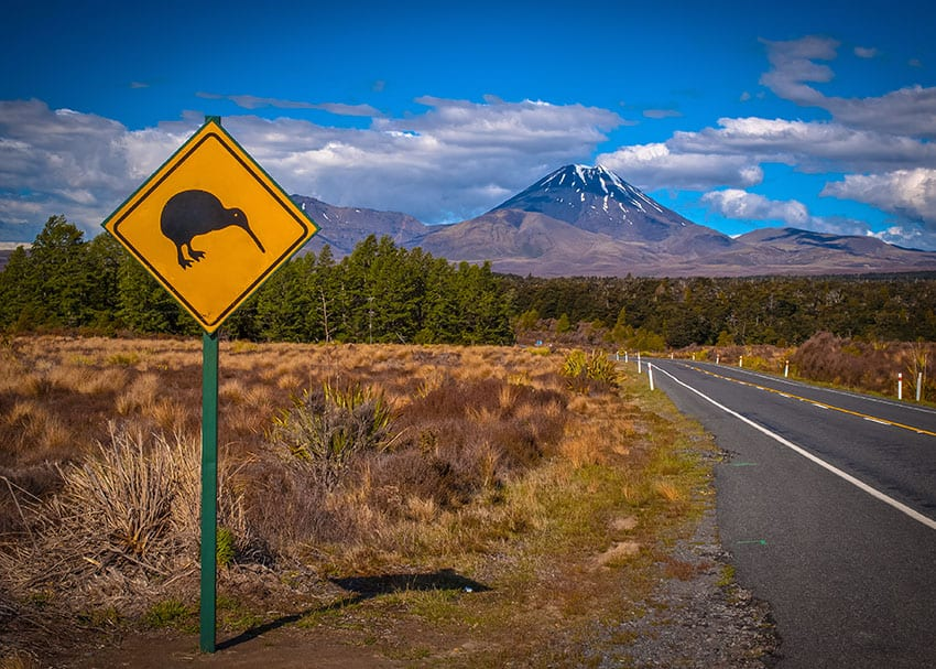 How to Prepare for a New Zealand Road Trip